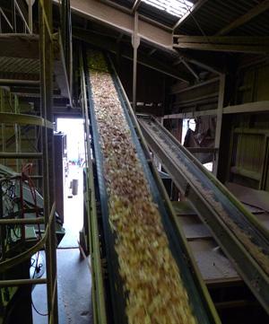 木材再利用のためチップ工場へ